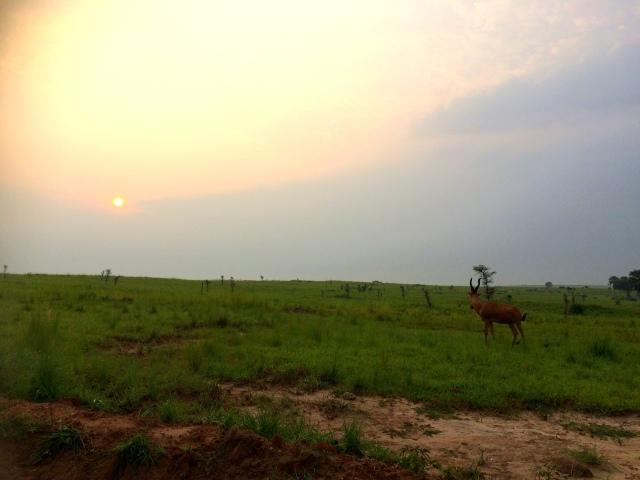 As the sun rises, so do the Impala.