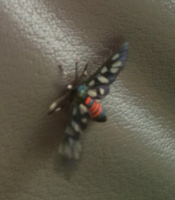 Even the bugs are beautiful. (All things bright and beautiful....)