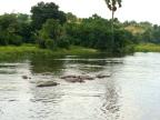 Hippo city!